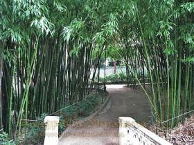 Нікітський ботанічний сад