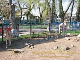 Мена. Зоопарк